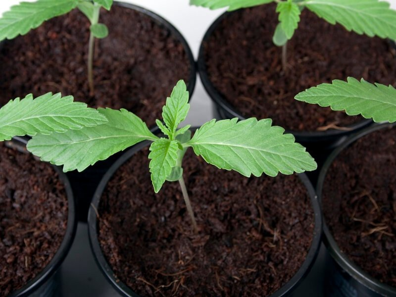 Getting Your Seeds to Successfully Germinate